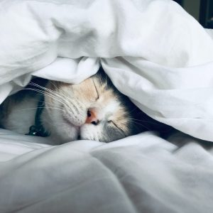 white cat on fabric